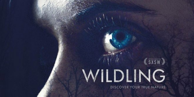 WILDING WS POSTER